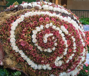 Approximtely 25,000 flowers make up this snail!