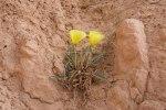Bryce Canyon 7a