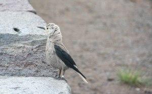 Baby bird at Crater Lake