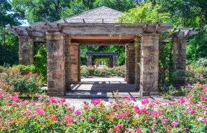 FW BG Rose Garden 1a