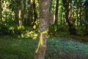 The yellow ribbon denoting where filming took place