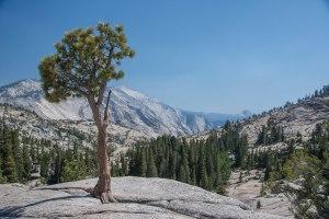 Yosemite 1st View 1a