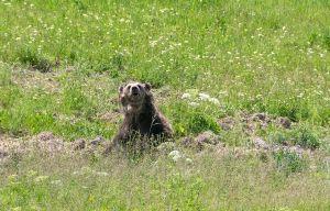 Si's bear!