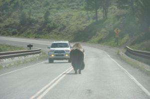 Buffalo's Rear!!