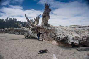 Beach log at La Push