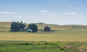 The Palouse
