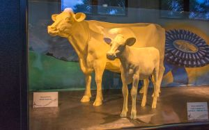 The butter cow and calf