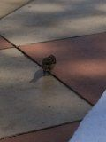 Sparrow comes for breakfast at the pool!