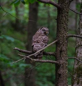 Owl 1 Blog