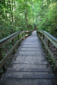 The steps to Mingo Falls
