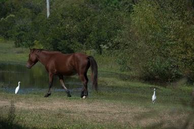 Horses 4