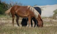 Horses 6