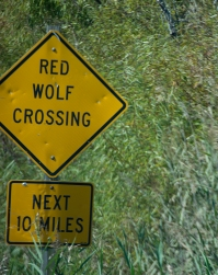 Not sure I know what a Red Wolf is!